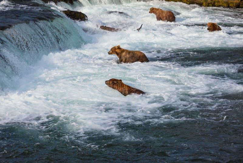 Betreffen Sie Alaska stockbilder
