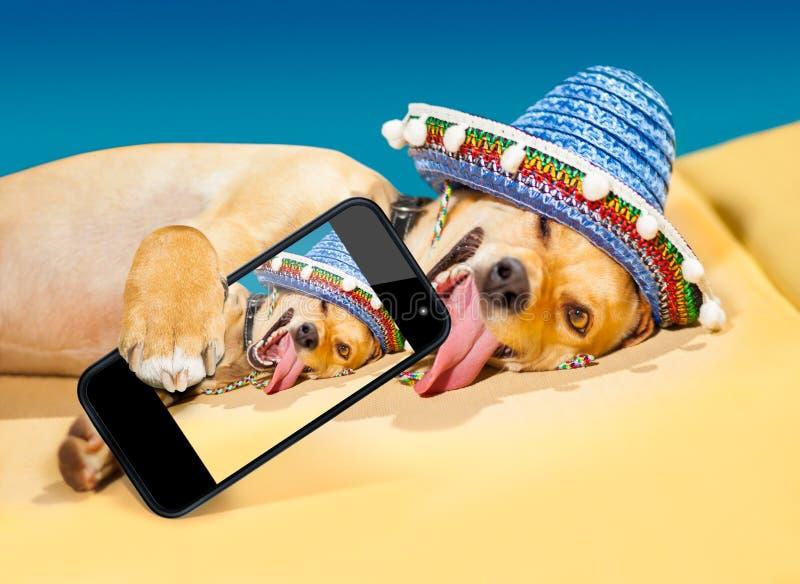 Betrunkener mexikanischer Hund lizenzfreie stockfotografie