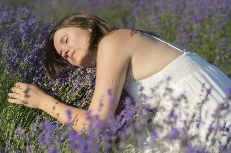 Bett des Lavendels lizenzfreie stockfotos
