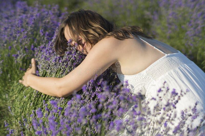 Bett des Lavendels stockfotografie