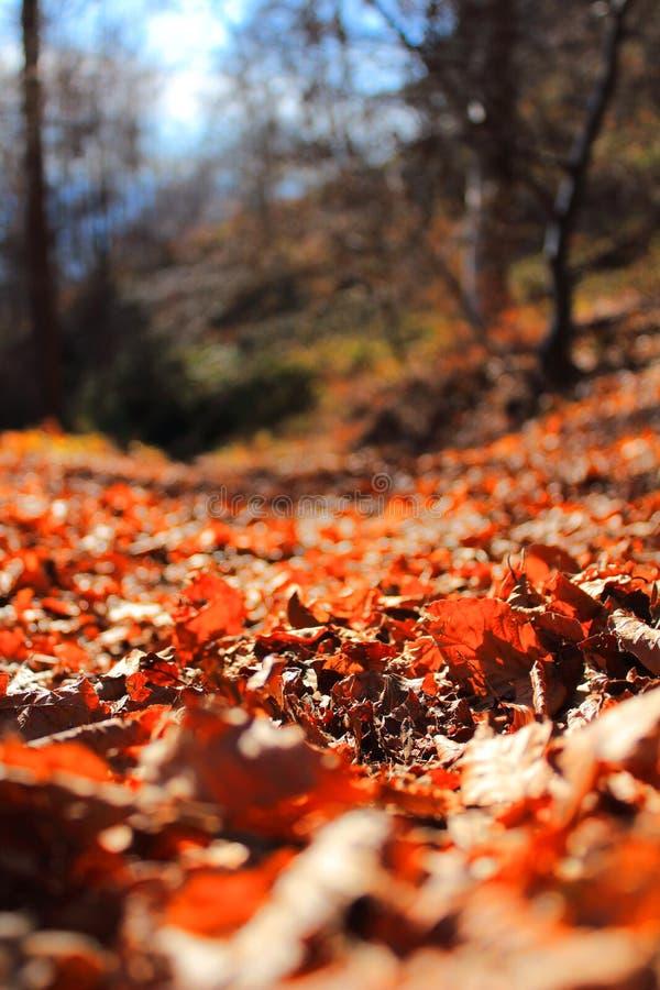 Bett von Blättern stockbilder