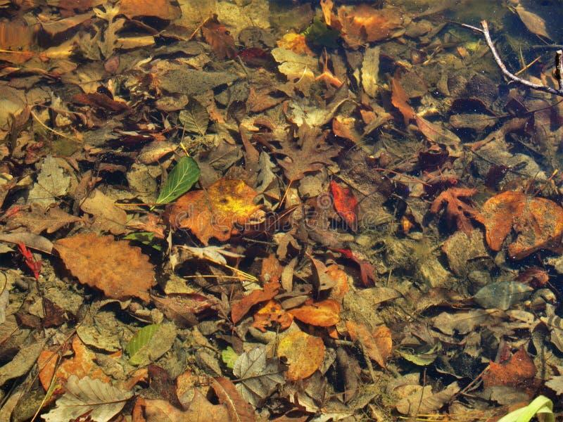 Bett von Blättern auf Teich-Unterseite lizenzfreie stockfotos