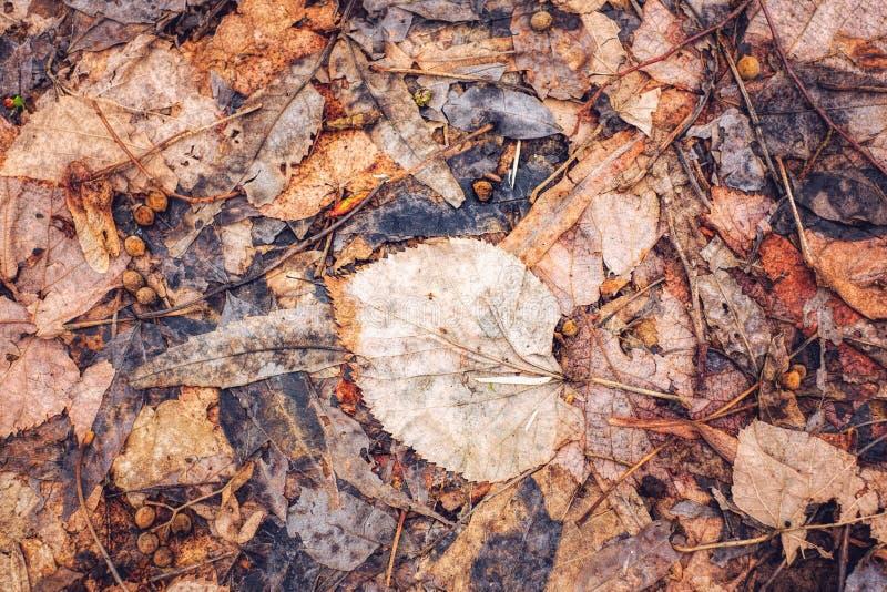Bett von den herbstlichen Blättern gefallen aus den Grund lizenzfreie stockbilder