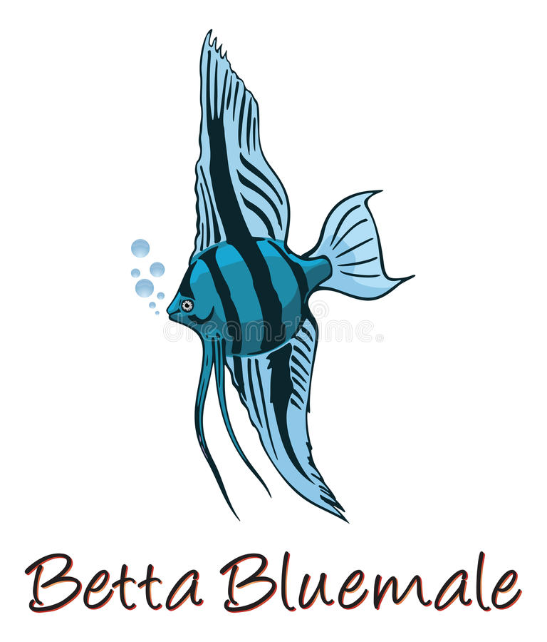Download Betta, Color Illustration stock vector. Image of isolated - 25965960
