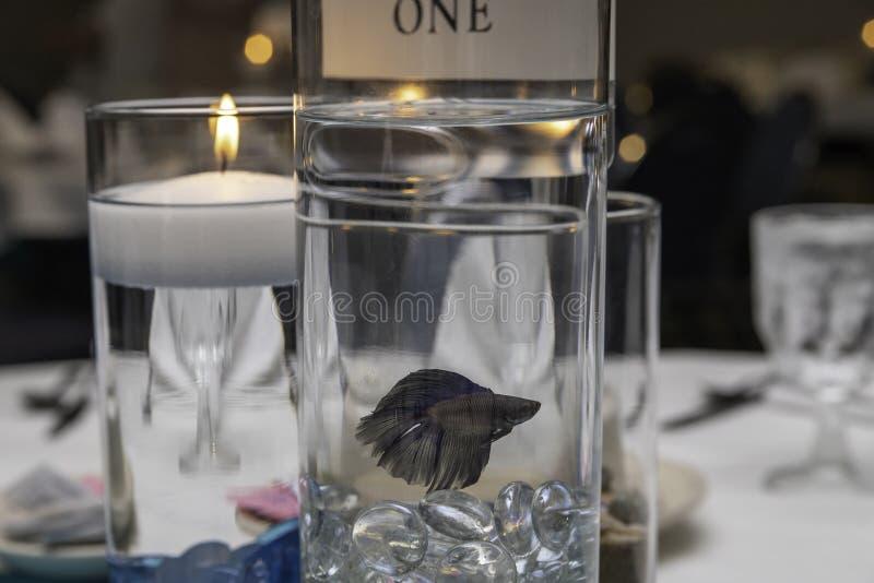 Betta Fish Center Piece en una tabla fotografía de archivo libre de regalías