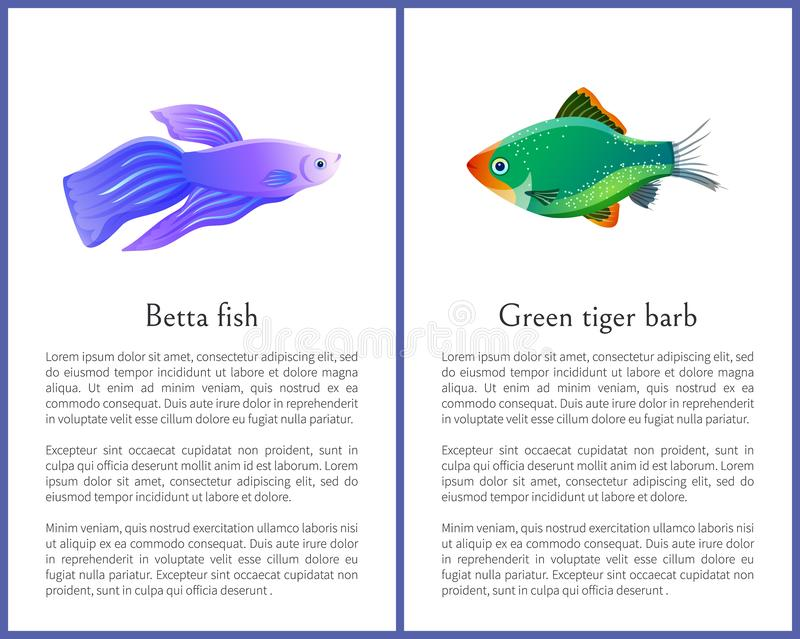 Betta Fish with Green Tiger Barb Vector Posters. Isolated on white backdrop illustration of glossy and particoloured representatives of marine life stock illustration