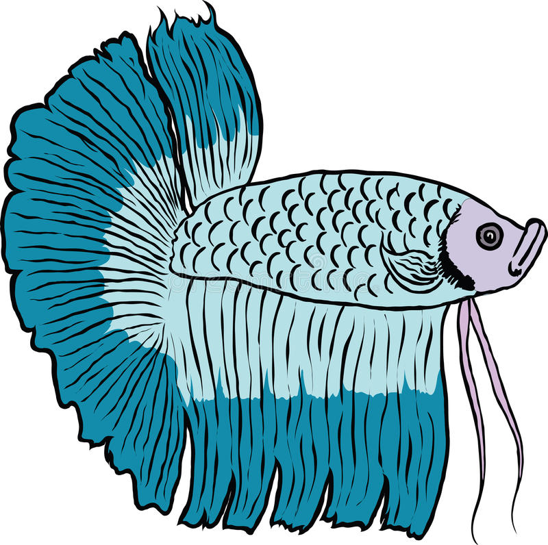 Download Betta Fish Or Siamese Fighting Fish Stock Vector - Image: 28345491