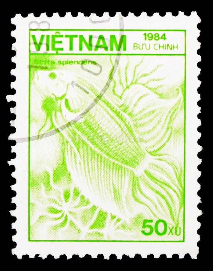 Betta-splendens des Siamesischen Kampffisches, Fauna und Flora serie, circa 1984 lizenzfreies stockbild