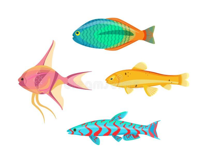 Betta Splendens Fish Types Set Vector Illustration stock illustration