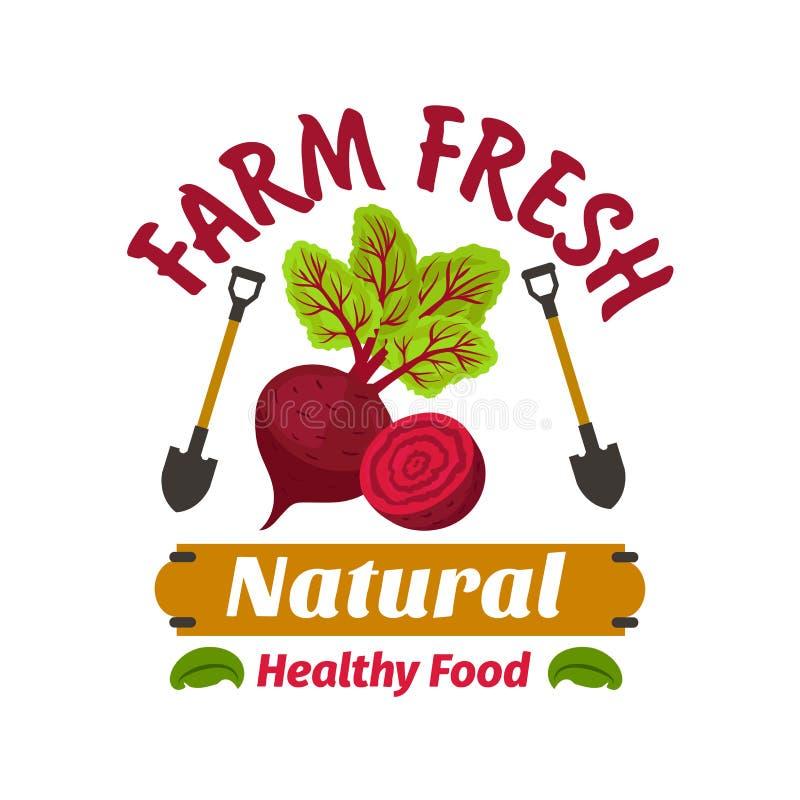 betterave Produit à base de légumes frais de vegan de ferme illustration stock