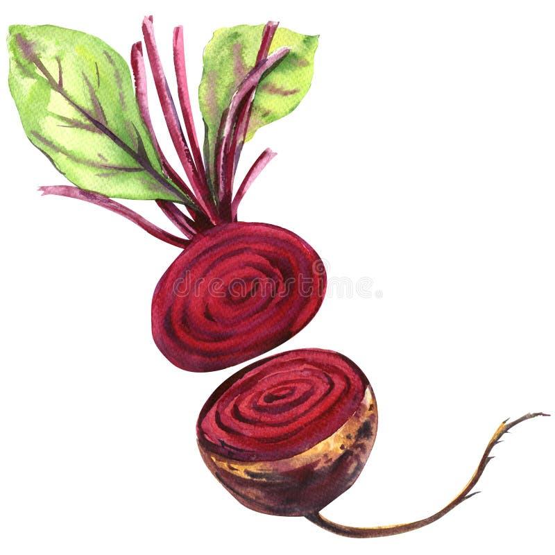 Betteraves fraîches avec des feuilles d'isolement, illustration d'aquarelle illustration stock