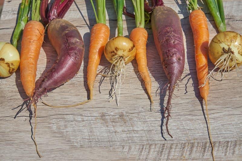 Betteraves, oignon et carotte organiques du cru récemment récoltés sur la table en bois Vue sup?rieure, l'espace de copie photographie stock libre de droits