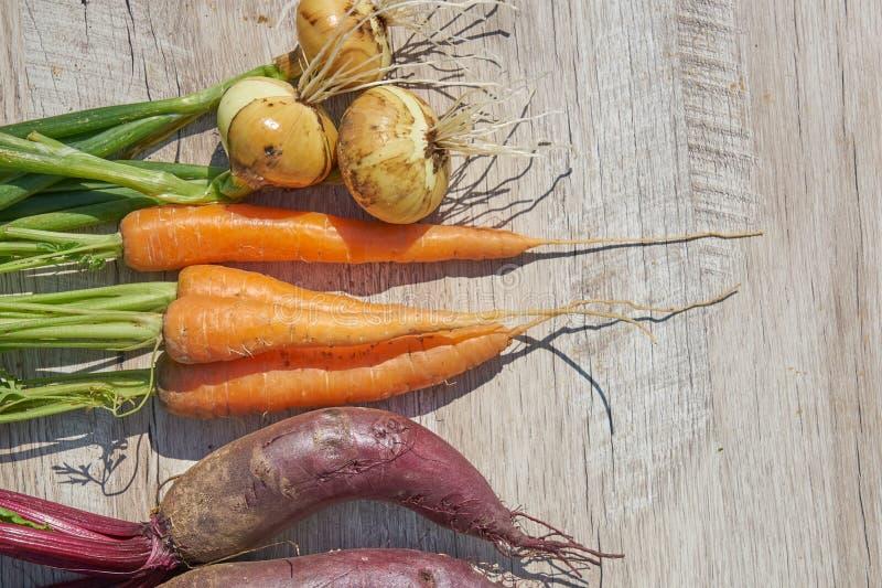 Betteraves, oignon et carotte organiques du cru récemment récoltés sur la table en bois Vue sup?rieure, l'espace de copie images stock