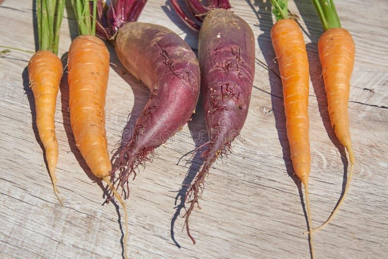 Betteraves, oignon et carotte organiques du cru récemment récoltés sur la table en bois Vue sup?rieure, l'espace de copie photo stock