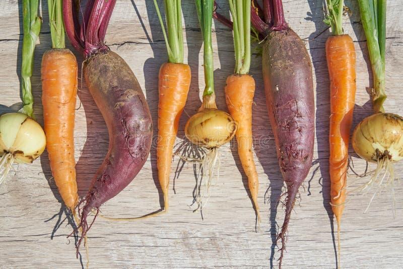 Betteraves, oignon et carotte organiques du cru récemment récoltés sur la table en bois Vue sup?rieure, l'espace de copie photo libre de droits