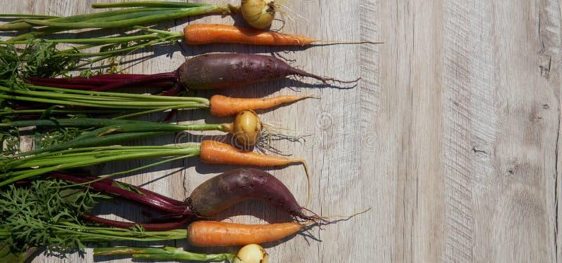 Betteraves, oignon et carotte organiques du cru récemment récoltés sur la table en bois Vue sup?rieure, l'espace de copie drapeau photos libres de droits