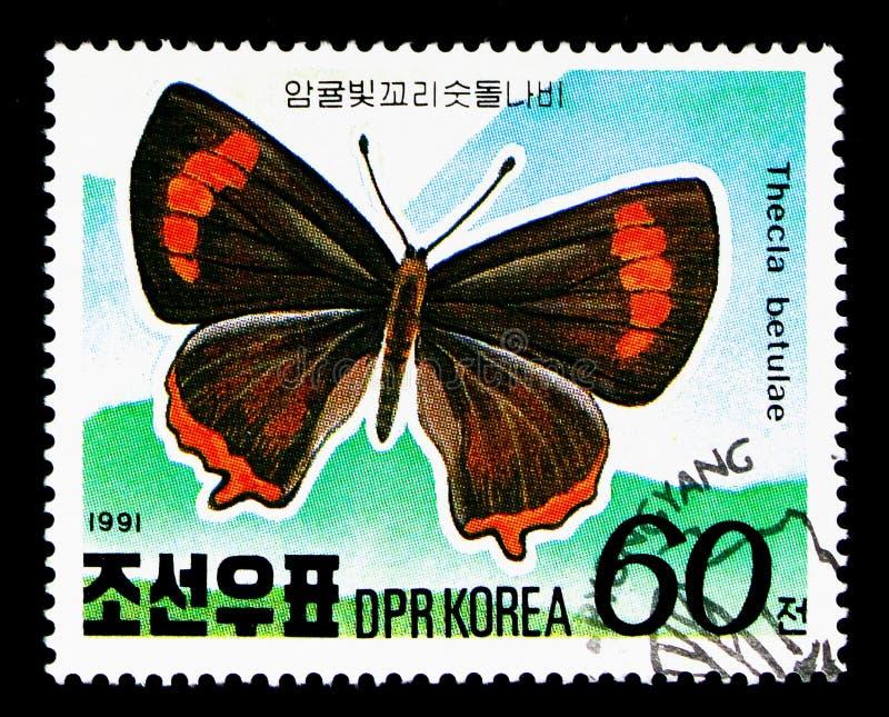 Betulae de Thecla do Hairstreak de Brown, serie alpino das borboletas, cerca de 1991 foto de stock royalty free
