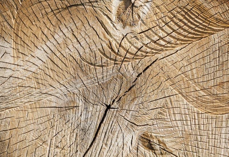 betulla dei tronchi segata fotografia stock libera da diritti