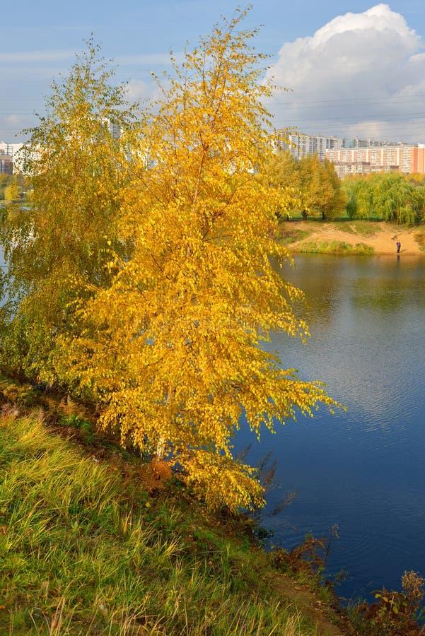 Betulla dorata sulla banca del lago blu immagine stock libera da diritti