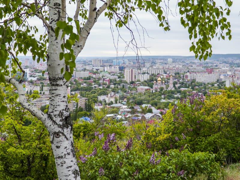 Betulla e lillà di fioritura nella priorità alta Nella vista del fondo della città di Saratov, la Russia fotografia stock