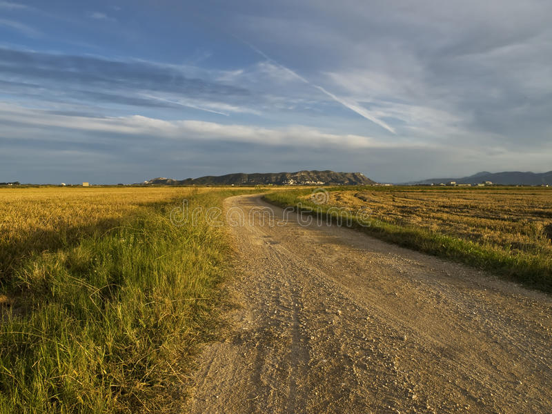 betweelandet fields paddyvägen royaltyfri bild
