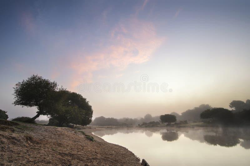 Beuatiful dawn sunrise landscape over misty lake in Summer royalty free stock photo