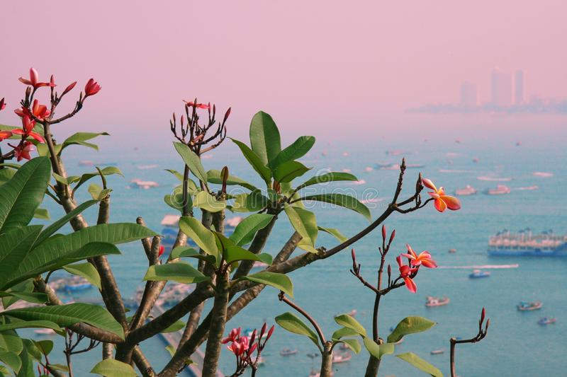 The beuatiful tropical flowers on the branch with ocen view as a background. City bay with many boats and ships on the water. Coul stock photography