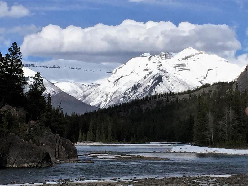 Beugen Sie Fluss, Nationalpark Banffs mit Pinetrees und Schnee im Hintergrund stockfoto