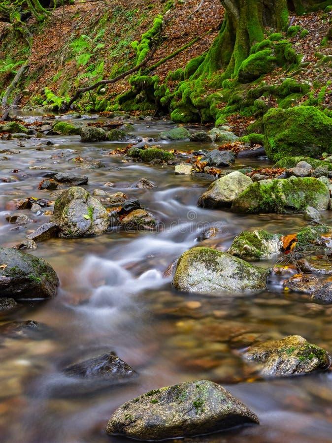 Beuk langs de Bianditzko-rivier in het bos van Artikutza stock afbeeldingen