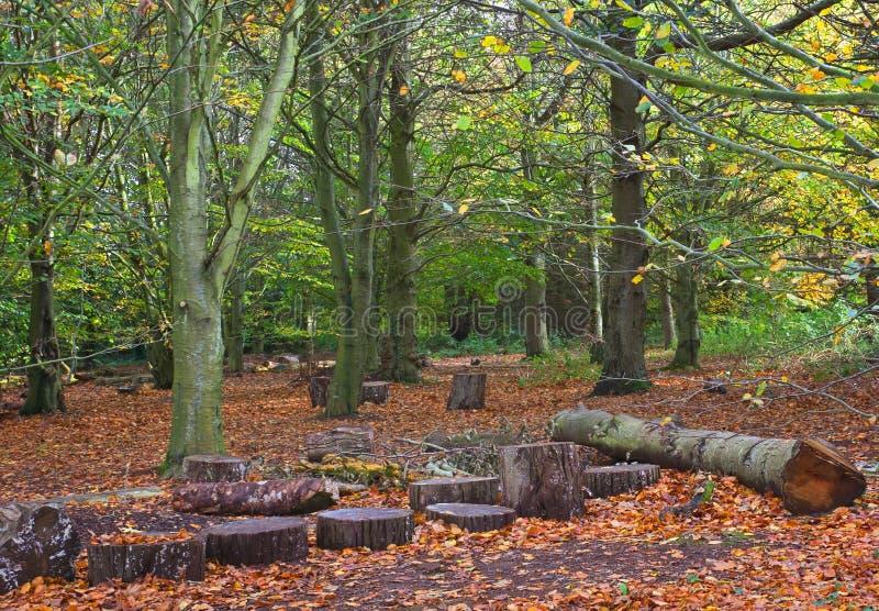 Beukehout in de Herfst stock fotografie