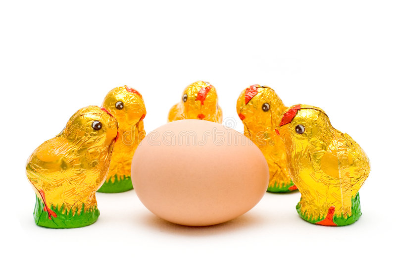 beundra östligt ägg för fågelungechoklad royaltyfri foto