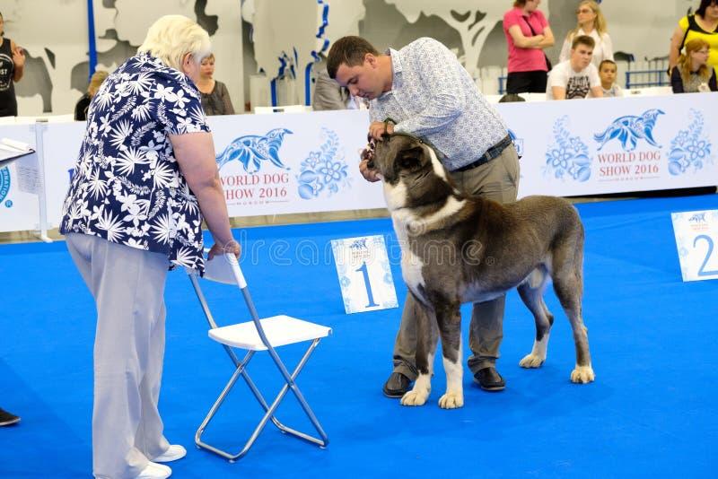 Beurteilen Sie Untersuchungshund auf der Welthundeshow lizenzfreie stockfotos
