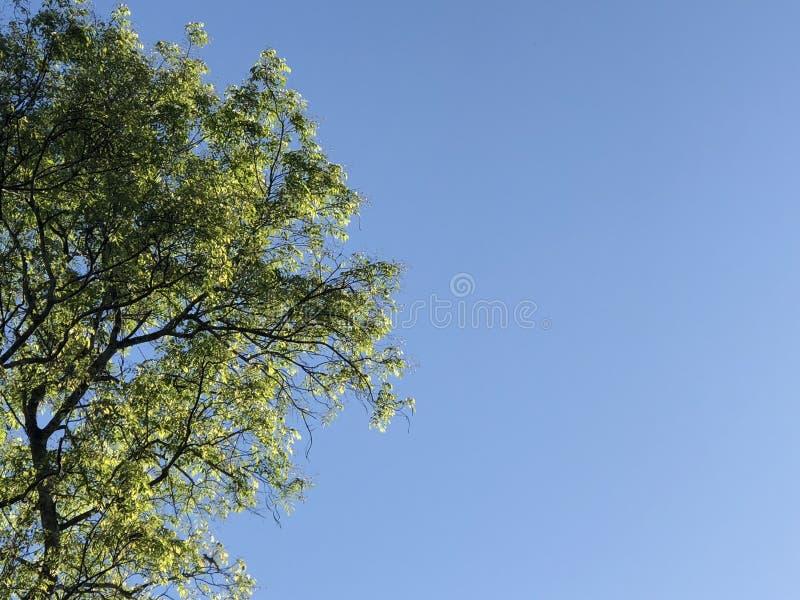 Beutiful high tree stock photography