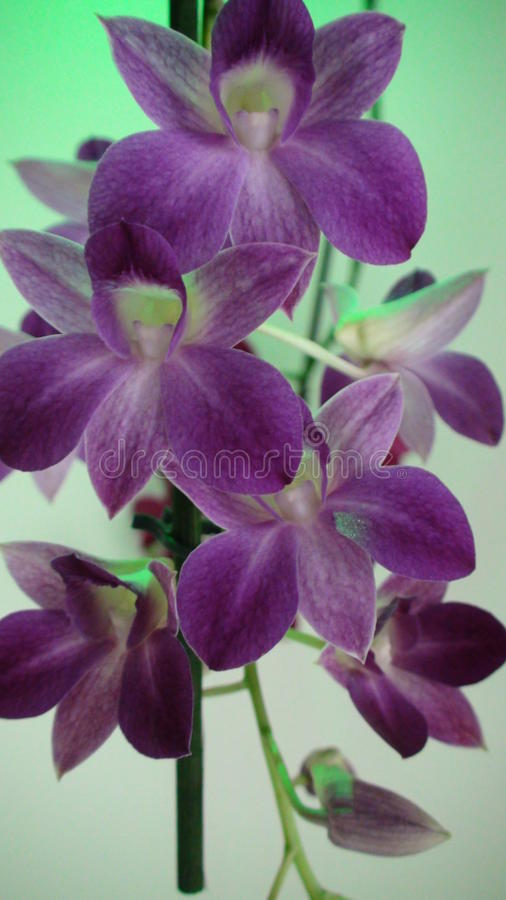 Beutiful orchids stock images