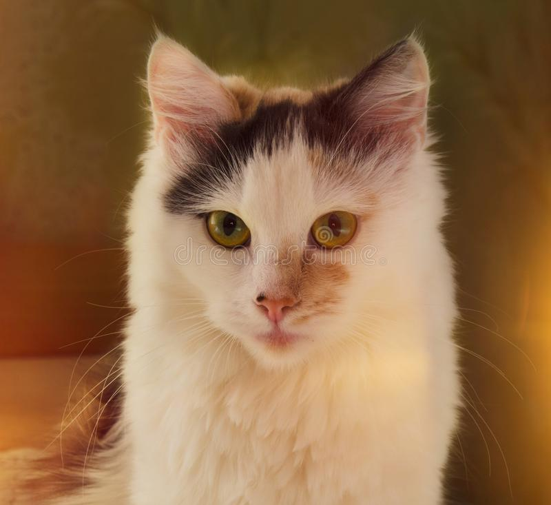 Cat Portrait. Beutiful photo of the cat with sunlight royalty free stock photography