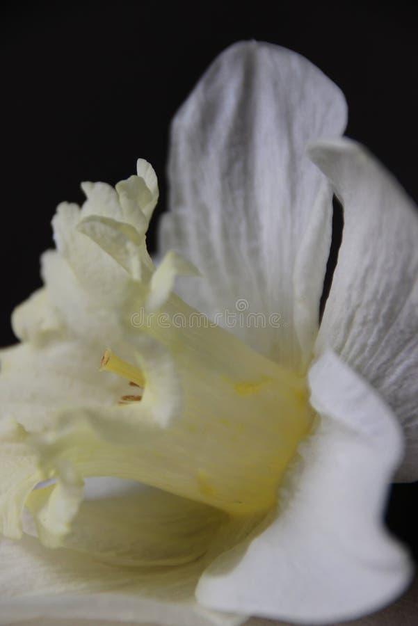 Beuty giallo fotografia stock