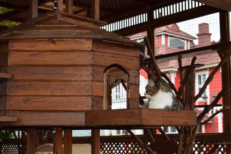 Beuty kot w klatce drewniany drzewo zdjęcie stock