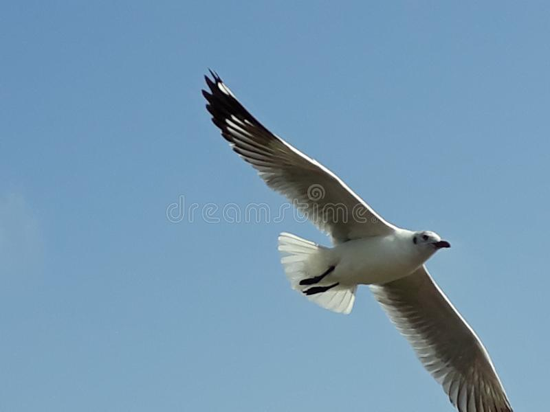 Beutyfull Overview of Flying Bird Cloud royalty free stock photos