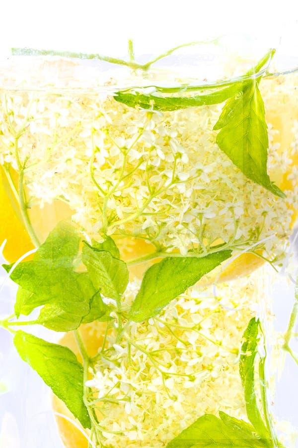 Download Bevanda Del Fiore Della Bacca Di Sambuco Con Il Limone Fotografia Stock - Immagine di fiore, dolce: 55350700