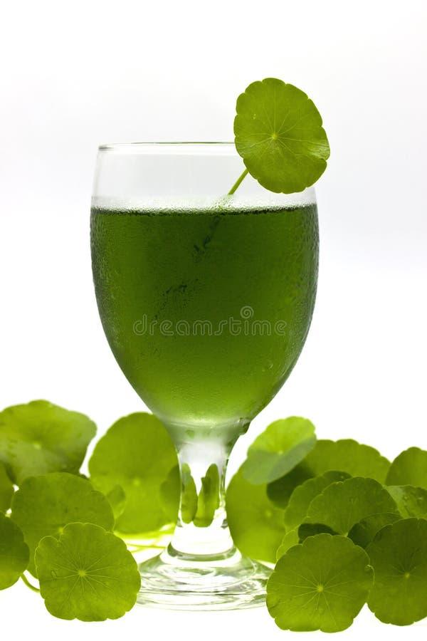 Bevanda della clorofilla immagine stock