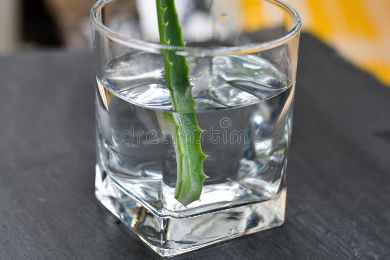 Bevanda della vera dell'aloe fotografia stock libera da diritti