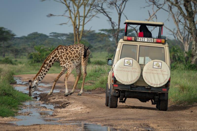 Download Bevande Masaie Della Giraffa Dalla Jeep Di Didascalia Della Pozza Immagine Stock Editoriale - Immagine di safari, kilimanjaro: 117975314