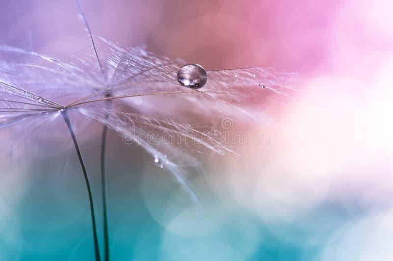 Bevattna droppe på en maskros, färgrik bakgrund med bokeh härlig abstrakt makro Selektivt fokusera royaltyfri fotografi