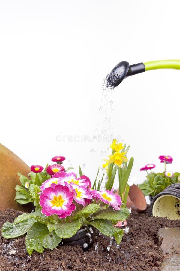 bevattna för blommor royaltyfria bilder