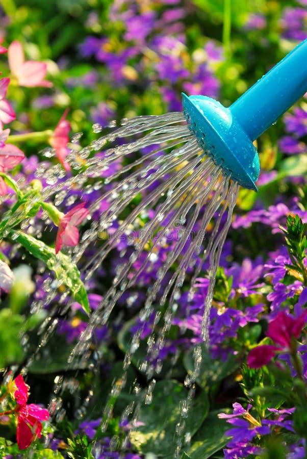 bevattna för blommor arkivbilder