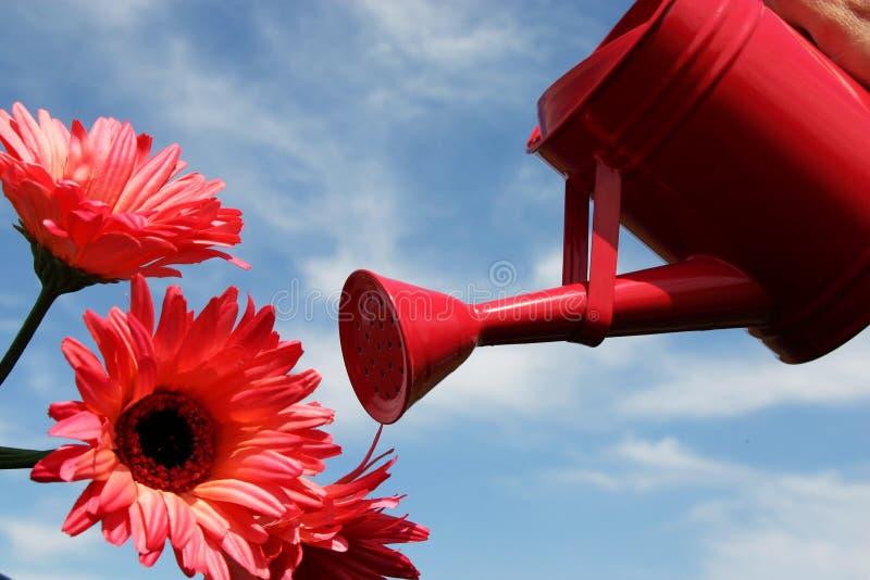 bevattna för blommor arkivfoto