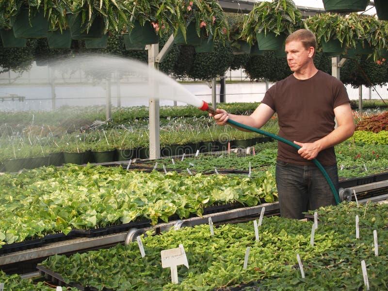 bevattna för växter för grönt hus royaltyfria foton