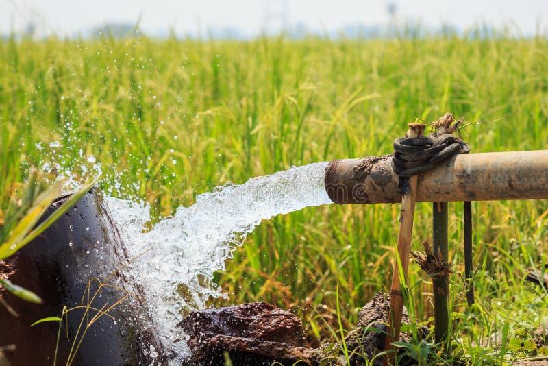 Bevattna flöde från det stora pumpröret i risfält i central av thailändskt royaltyfria bilder