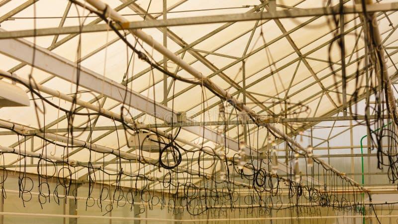 Bevattna kablar som hänger under tak i växthus royaltyfri foto