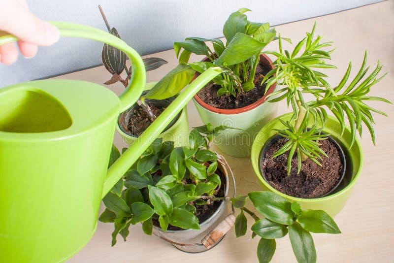 Bevattna lade in växter på en trätabell royaltyfri fotografi